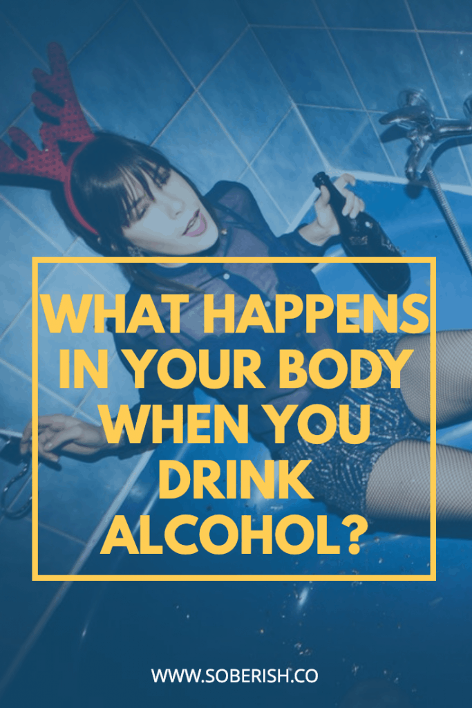 Learn how alcohol effects your body from the first drink to the last